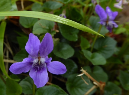 violette-bonaguil